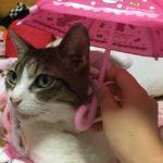 小澤先生のネコちゃん・ミリーちゃん