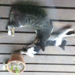 町田先生・地域猫