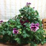 町田先生・お花の紹介